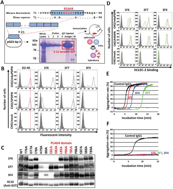 Establishment of monkey podoplanin-neutralizing antibodies.