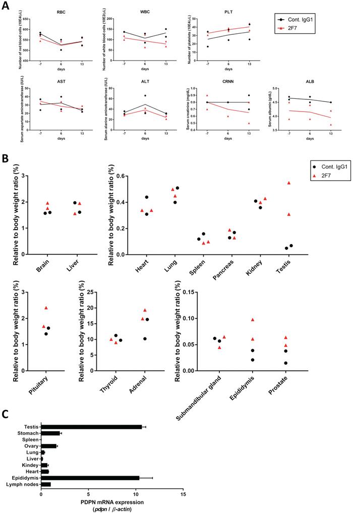 Evaluation of toxicity of anti-podoplanin neutralizing antibodies in Macaca fascicularis.
