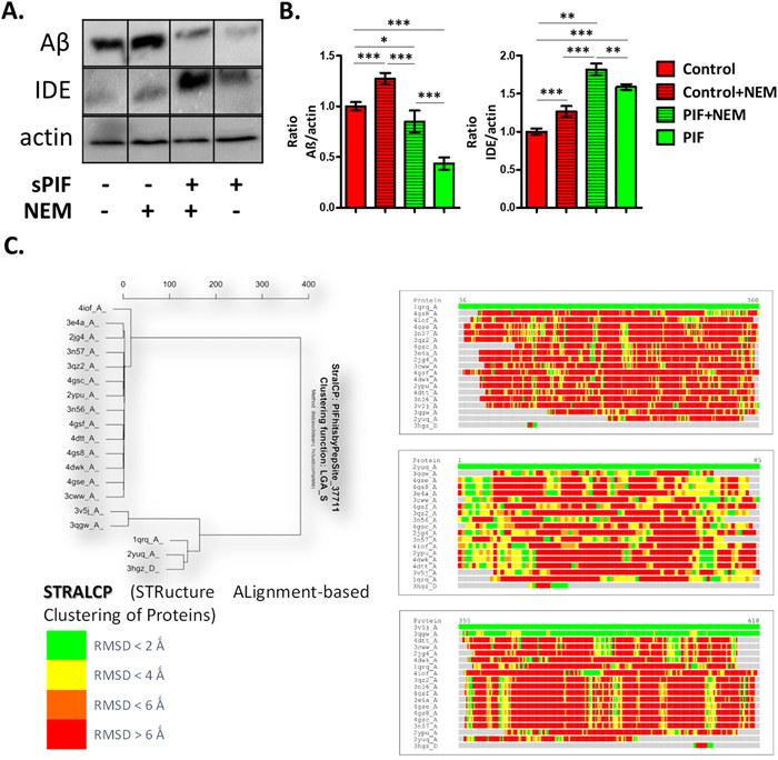 PIF reduces Aβ formation in IDE dependent manner and targets distinct protein families.