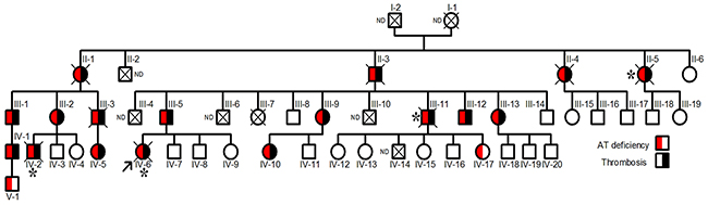 Pedigree of the Norwegian thrombophilic family.