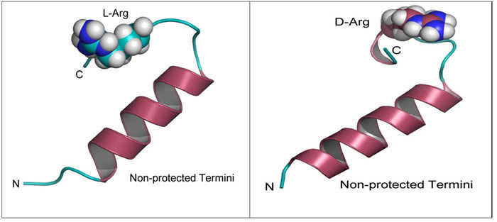 Modeling of D-Arg-PEP and L-Arg-PEP.