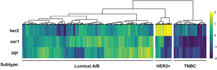Stratification of human breast cancer samples from The Cancer Genome Atlas database into three putative breast cancer subtypes.