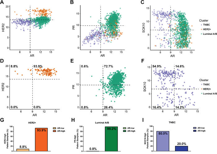 Androgen Receptor is expression is highest in the HER2-positive and Luminal A/B subtypes.
