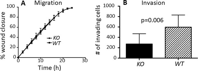 capns1 KO is associated with attenuated MTEC in vitro invasion but no effect on migration.