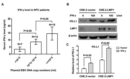 IFN-γ up-regulated PD-L1 expression in human nasopharyngeal carcinoma cells, which was independent of but synergetic with LMP1.