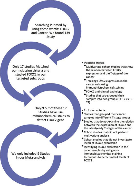 Summary of study selection.