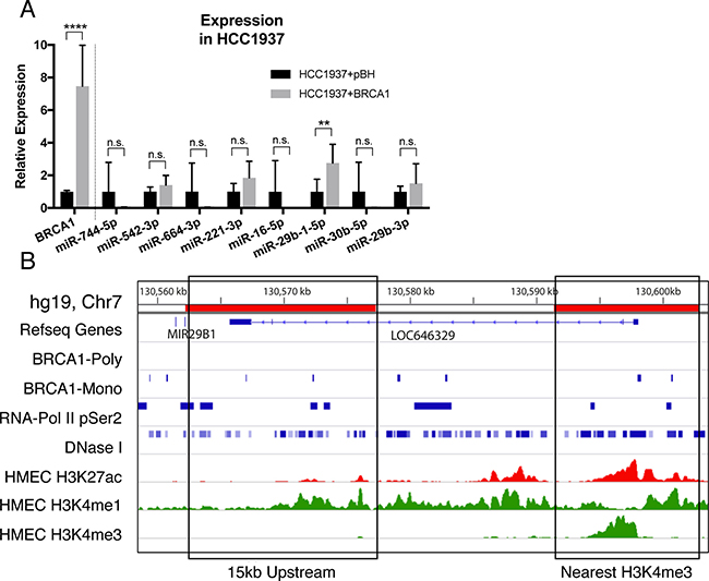 BRCA1 over-expression upregulates miR-29b-1-5p.
