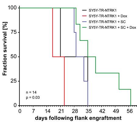 Schwann cells reduce proliferation of NTRK1-expresing neuroblastoma cells