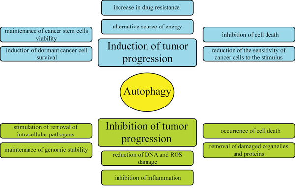 Dual and contradictory roles of autophagy in oncogenesis.
