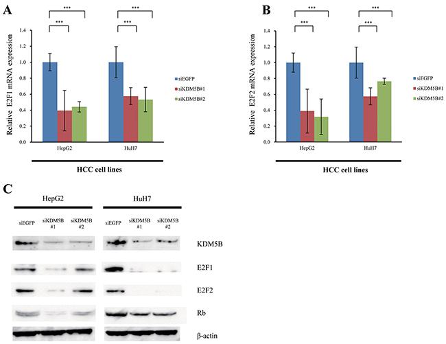 E2F1 and E2F2 are downstream genes of KDM5B.
