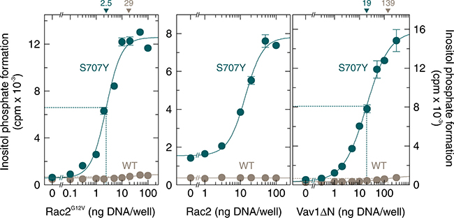 The point mutation S707Y augments the responsiveness of PLCγ2 to constitutively active Rac2, wild-type Rac2, and constitutively active Vav1.