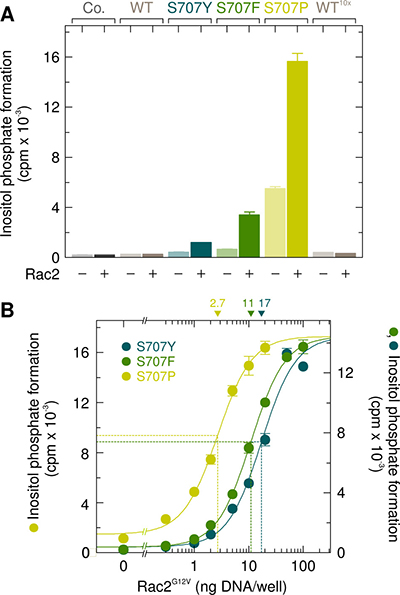 The point mutations S707Y, S707F, and S707P augment the responsiveness of PLCγ2 to exogenous wild-type Rac2 and Rac2G12V.