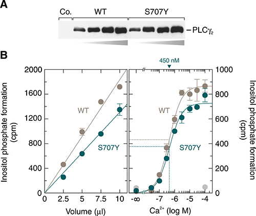 The activities of soluble, insect-cell-expressed wild-type and S707Y mutant PLCγ2 in a cell-free system made up of artificial lipid vesicles are similar.