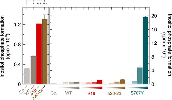 Comparison of the APLAID point mutant PLCγ2S707Y to the PLAID deletion mutants PLCγ2Δ19 and PLCγ2Δ20-22 at 37° C.