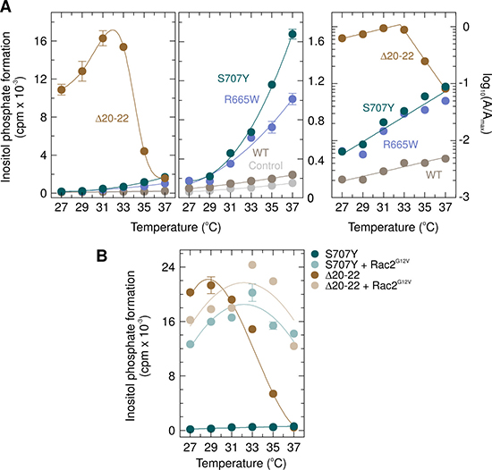 Unlike the PLAID PLCγ2 deletion mutant PLCγ2Δ20–22, neither APLAID and ibrutinib resistance PLCγ2 mutant S707Y nor the ibrutinib resistance PLCγ2 mutant R665W are activated by cool temperatures.