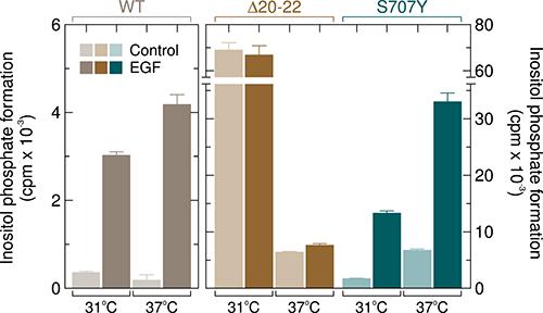 Unlike the PLCγ2 deletion mutant Δ20–22, PLCγ2S707Y is sensitive to stimulation by EGF.