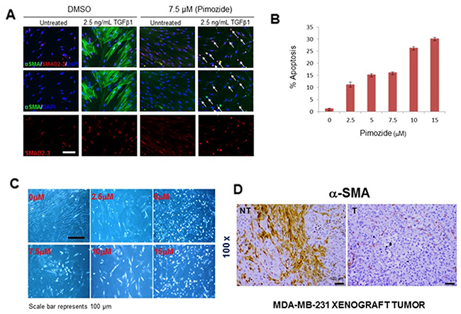 Pimozide suppresses fibroblast differentiation, reduces cell proliferation and increases apoptosis.