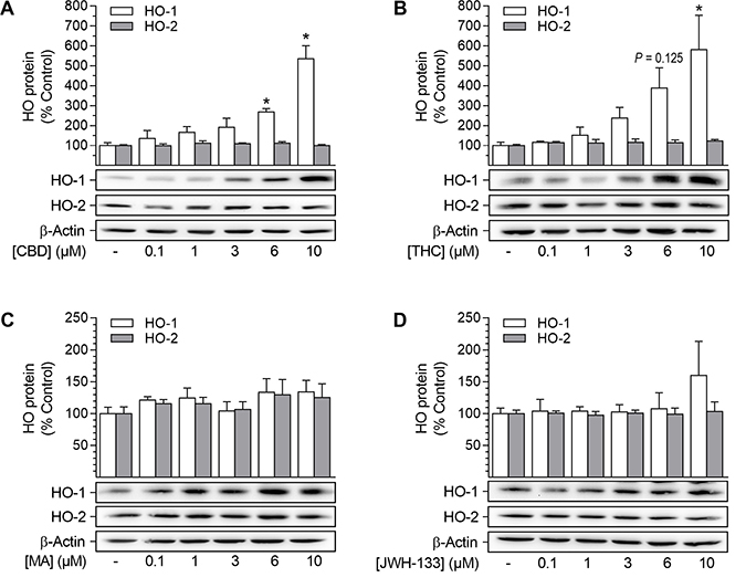 Effect of cannabinoids on HO-1 and HO-2 protein expression in HUASMC.