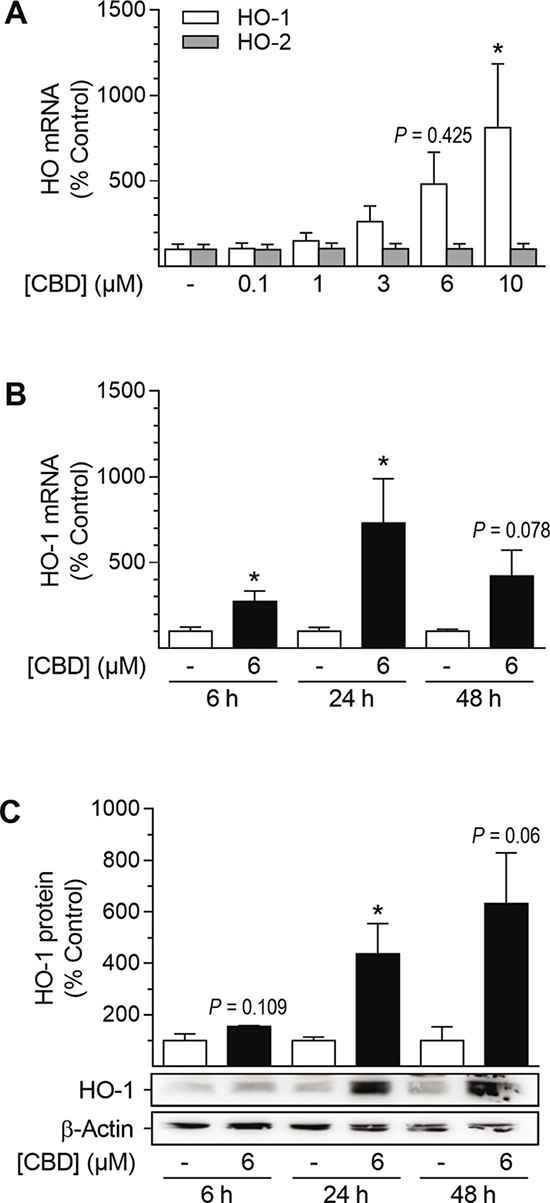Effect of CBD on HO-1 and HO-2 mRNA and HO-1 protein expression in HUASMC.