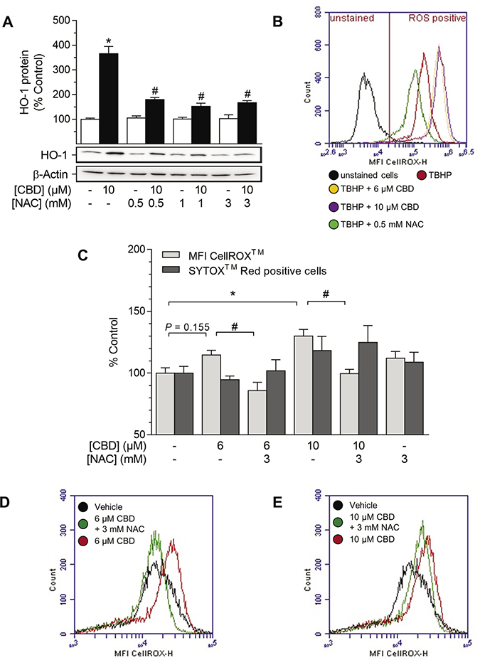 Effect of NAC on CBD-mediated induction of HO-1 and ROS generation in HUASMC.