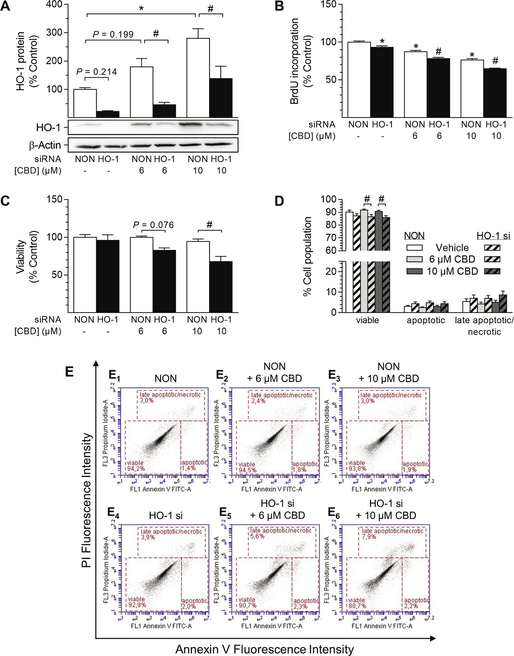 Impact of HO-1 siRNA on CBD-mediated anti-proliferative effects and viability of HUASMC.
