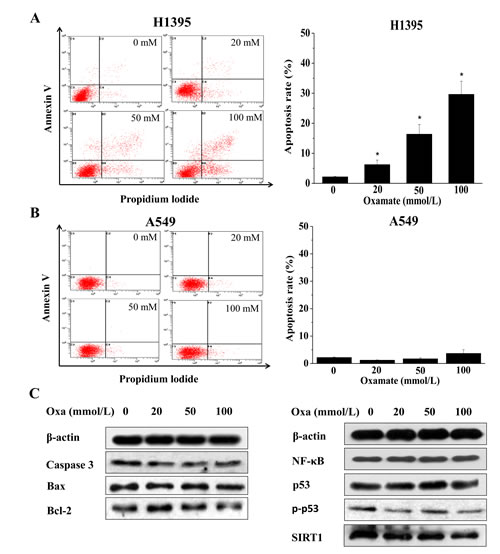 LDH-A inhibition by oxamate induces apoptosis in H1395 while not in A549 cells.