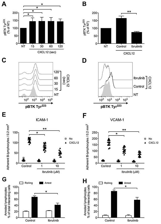 BTK is activated by CXCL12 and mediates adhesion of CLL B-lymphocytes to ICAM-1 and VCAM-1.