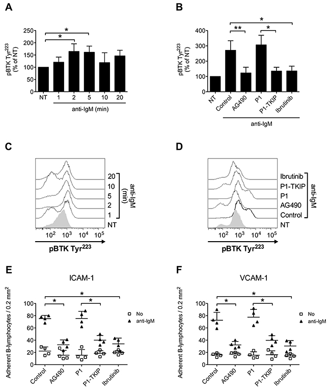 JAK2-dependent BTK activation mediates BCR-triggered adhesion of CLL B-lymphocytes.