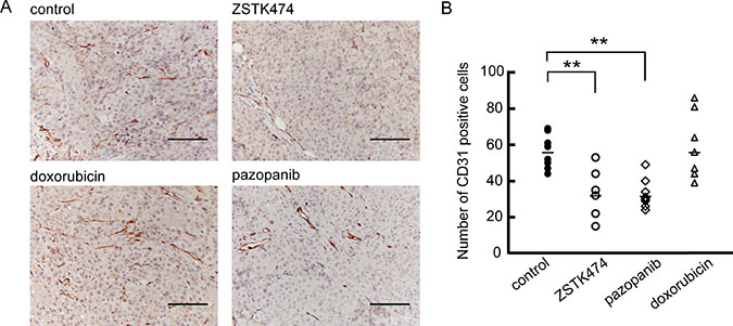 Anti-angiogenic activity of ZSTK474 against MES-SA xenograft in vivo.