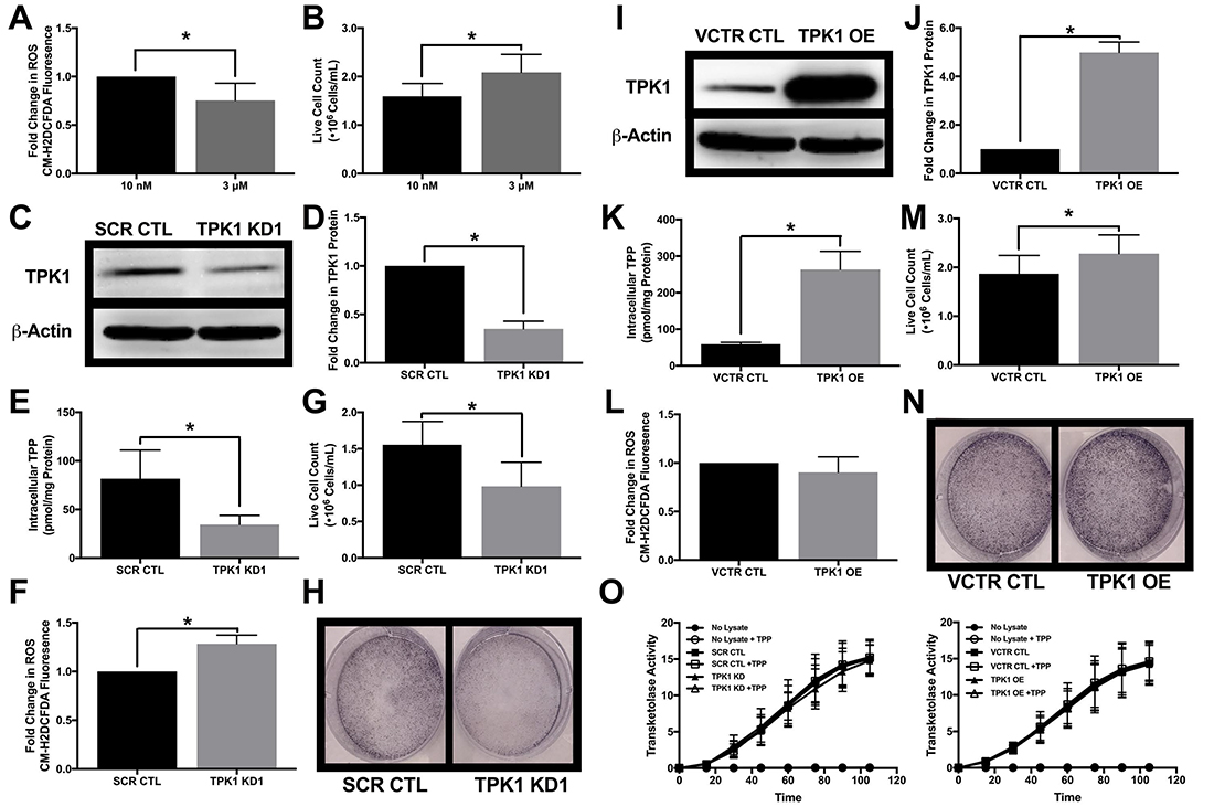 Impact of TPK1 on tumor cell proliferation during supplemental thiamine conditions.