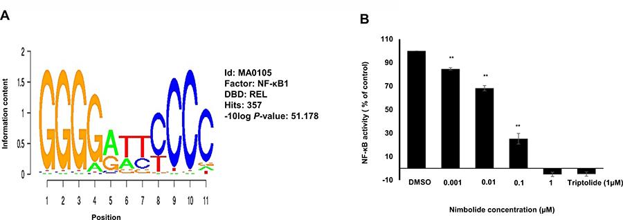 Nimbolide inhibits NF-κB activity.