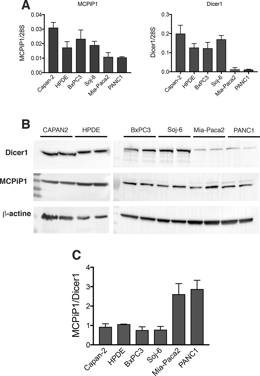 Expression of Dicer1 and MCPiP1 in tumoral pancreatic cell lines.