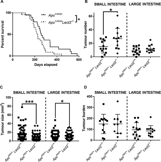 Homozygous Lect2 deletion drives Wnt-driven tumorigenesis and decreases survival.
