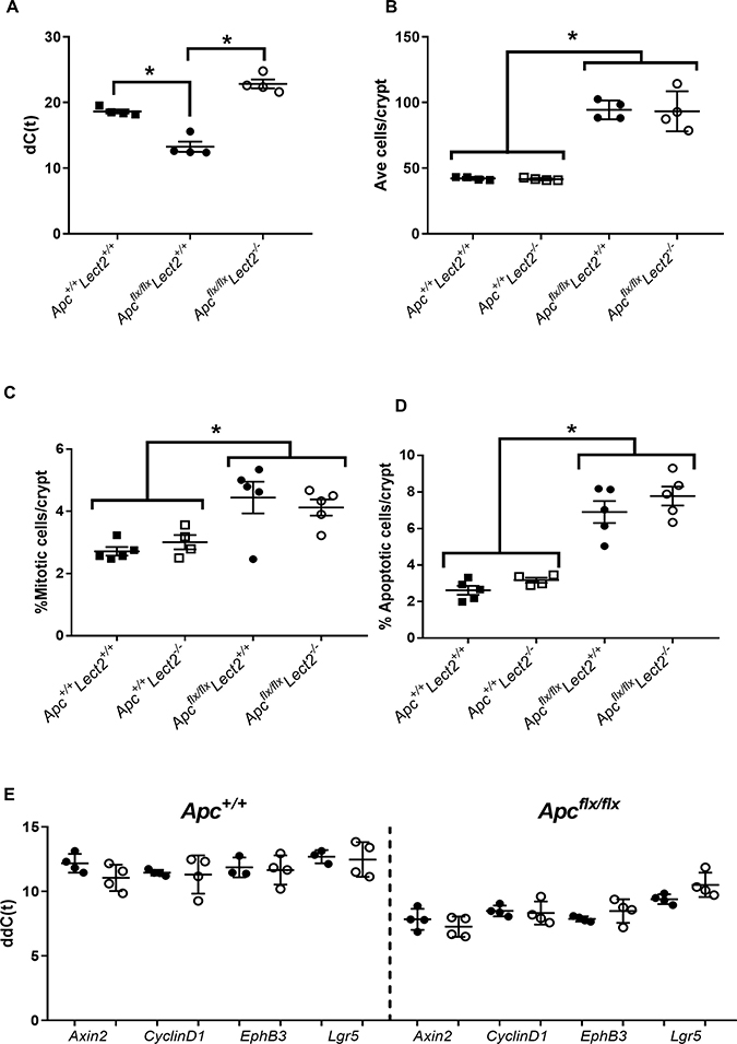 Combined loss of Apc and Lect2 in the mouse small intestine has no significant effect on the Apc homozygous phenotype.