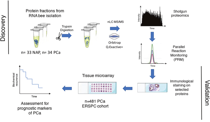 Workflow for finding proteins in PCa tissue that relate to prediction of biochemical recurrence.