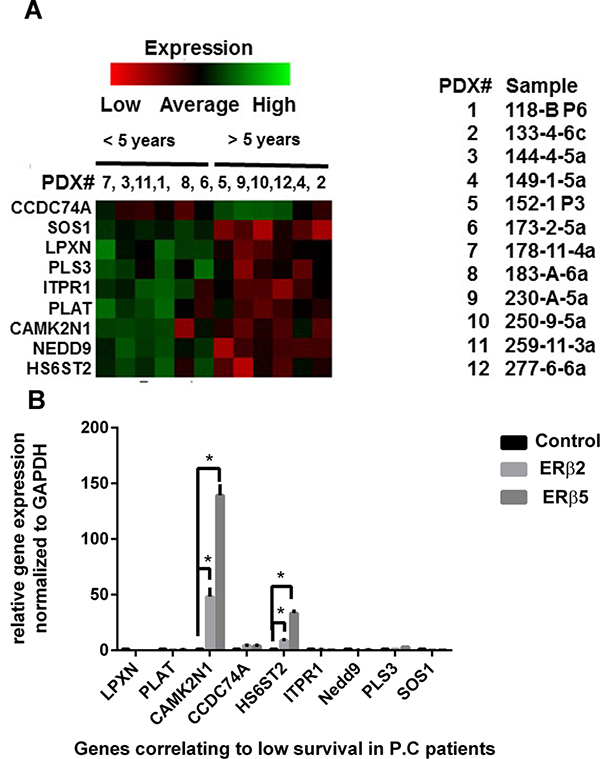 Clustering of genes related to survival in prostate cancer PDX.