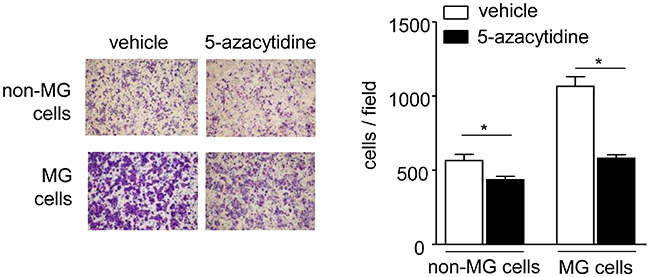 Effects of 5-azacytidine treatment on cell migration.