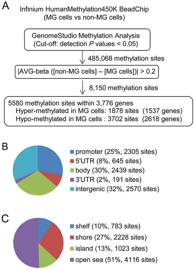 Analysis of the differentially methylated CpG sites between MG and non-MG cells.