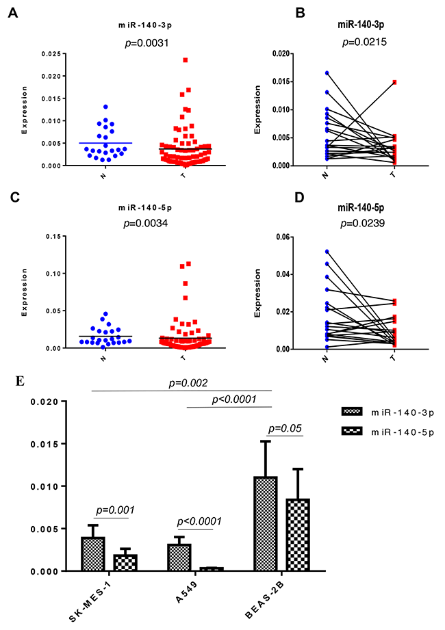 Expression of miR-140-3p in the NSCLC cohort and lung cell lines.