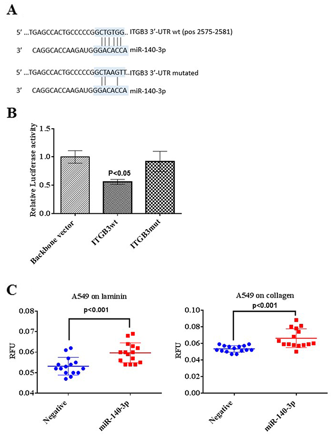 Validation of ITGB3 as a direct target of miR-140-3p.