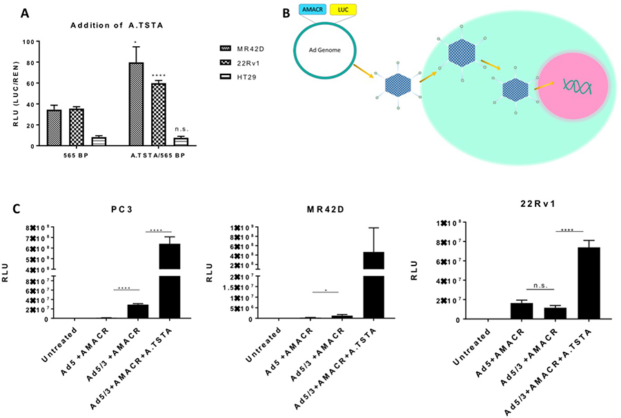 Addition of the advanced two-step transcriptional amplification system and assessment of promoter activity using adenoviral gene delivery in vitro.