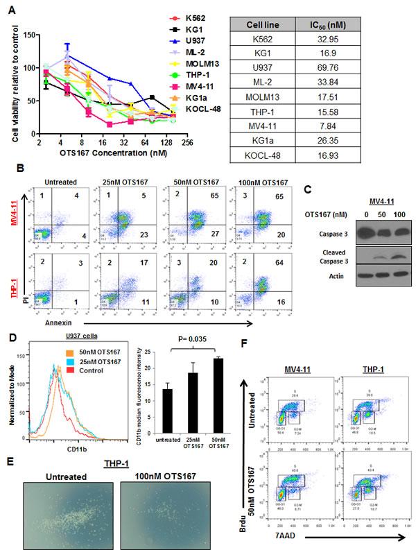 MELK inhibitor OTS167 exhibits anti-leukemia activity in AML cell lines.