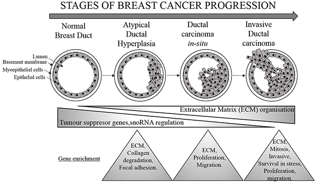 Molecular changes associated with breast cancer progression.