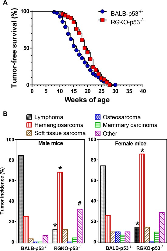 Tumor-free survival and tumor histotype incidence in homozygous p53 knockout mice.