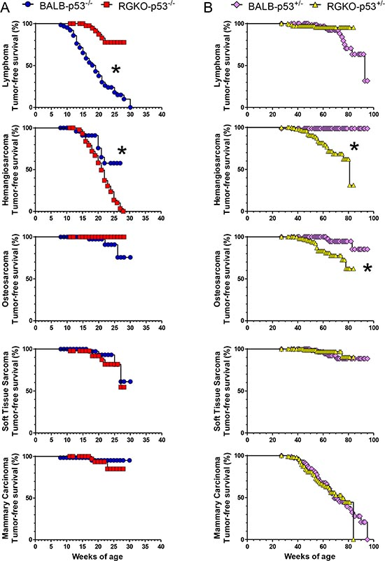 Tumor-free survival rate by individual tumor histotype of homozygous and heterozygous p53 knockout mice.