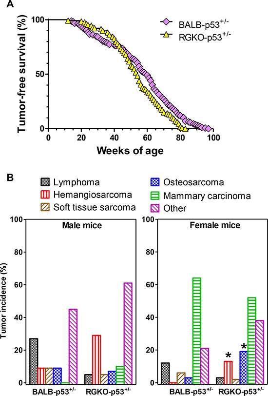 Tumor-free survival rate and tumor histotype incidence in heterozygous p53 mice.