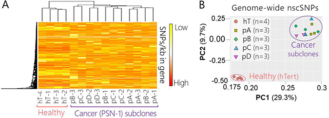 Genome-wide nscSNP Analysis PSN-1 subclones and healthy control cells.
