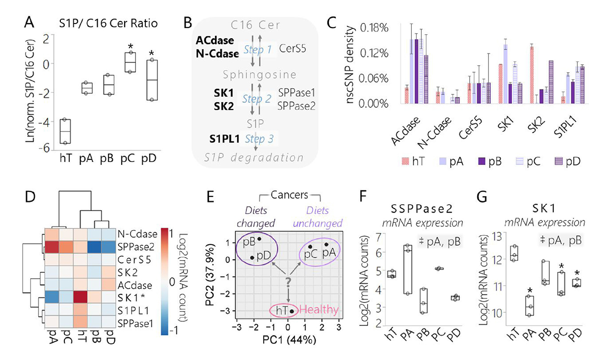 Data derived from lipidomics and RNA-Seq assays suggest a conserved shift in signaling sphingolipid metabolism in pancreatic cancer subclones relative to the healthy control driven in part by SK1.