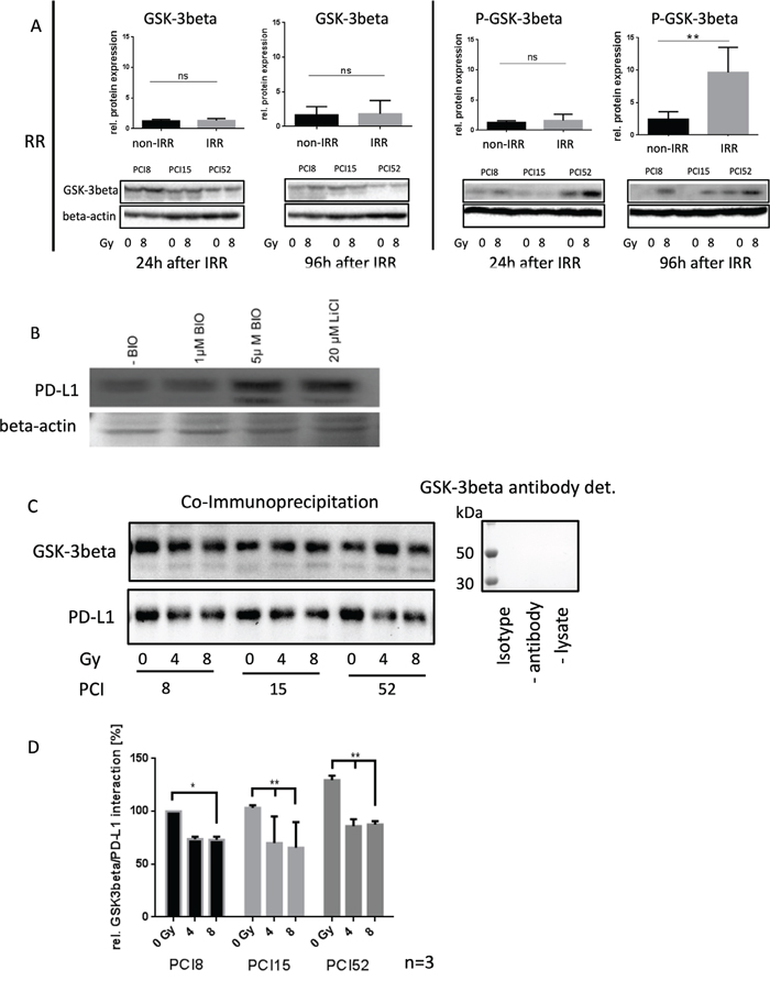 Regulation of PD-L1 protein expression.