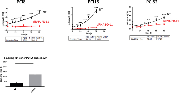 PD-L1 function in RR cell lines.